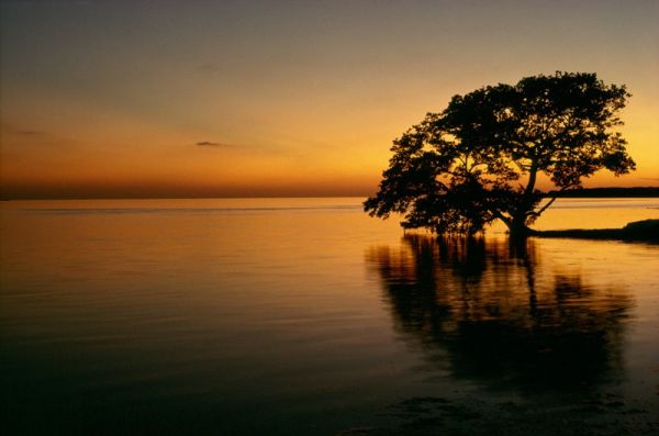 Florida bay Everglades Sunset tree water mangrove